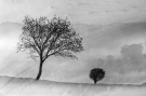 a_couple_of_trees