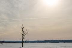 Nøgen træ i isen