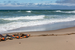 Thy reb på strand F