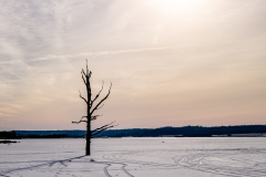 Bøllingsø med træ