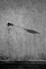 Dropdown Shadow