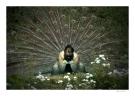 i-udspring-peter-birk