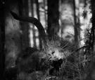 hammerfoto-8989
