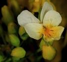 ck-lille-blomst