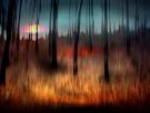 flemming-rask-sunset
