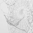 kirsten_andersen_cobweb