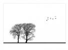 kjeld-agerskov-birds-and-trees