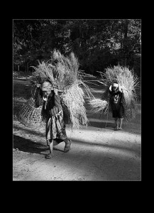 Jørn B. Hede: Corn Sheaf