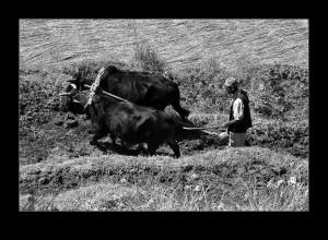Jørn B. Hede: Ploughing