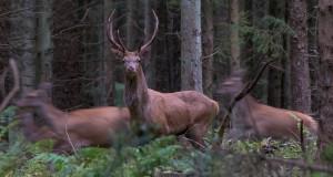 Efterårets fototur til Djursland