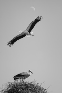 mono-4-plads-linda-storke