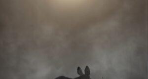 Månedens billede august (valgt på klubaften den 10. september)