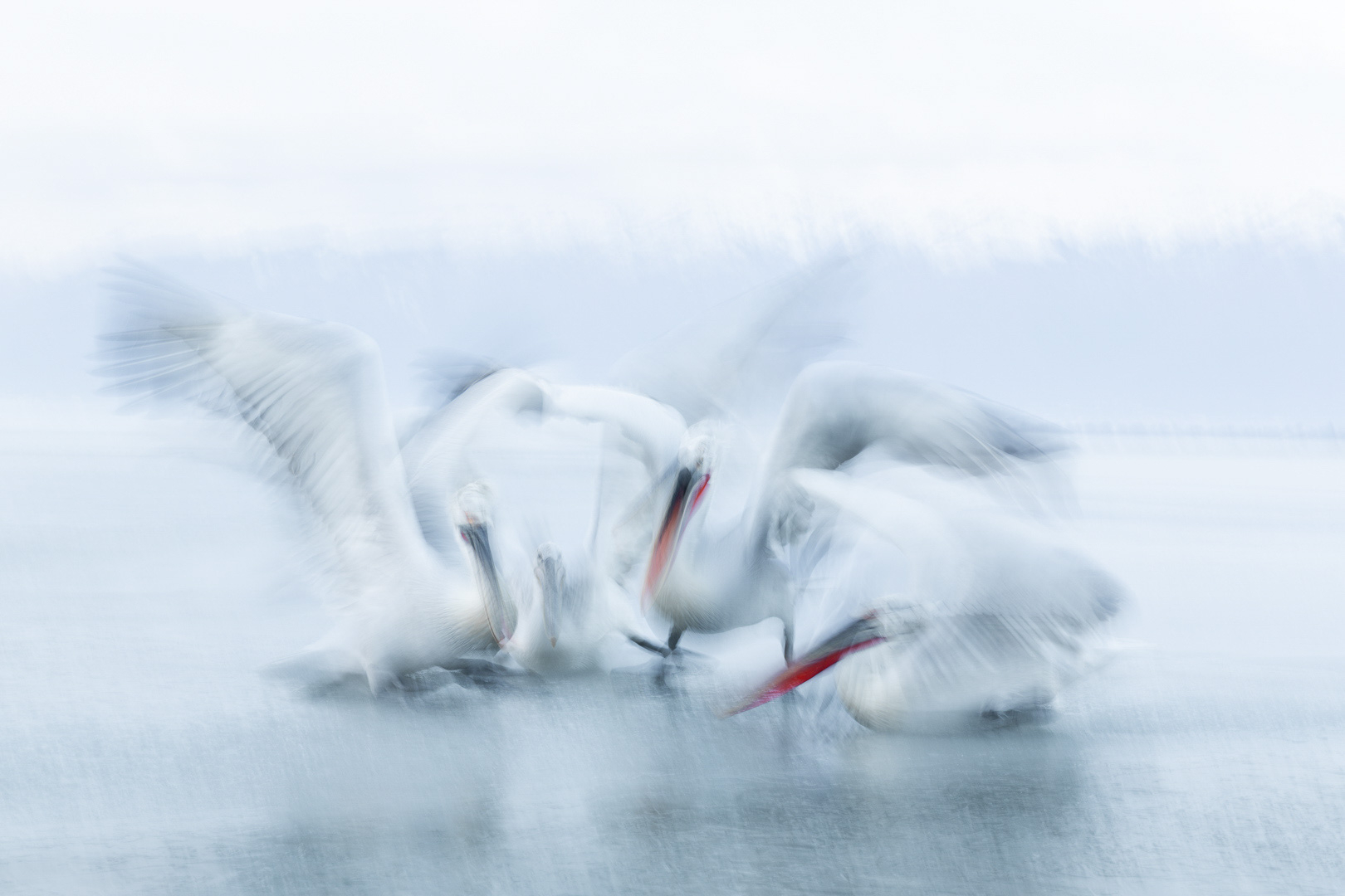 4248604399173110110-FD4-Aalborg_Fotoklub-Peter_Bentsen-Pelican_action