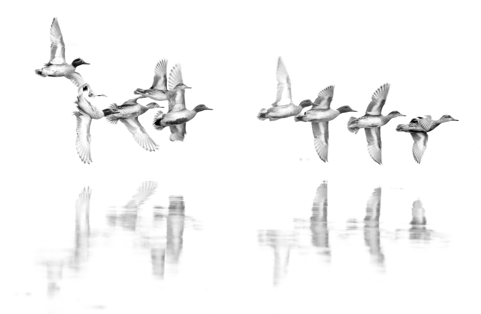 4262246446012251141-MP2_The-falling-duck